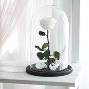 Белая роза в колбе