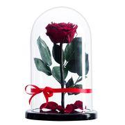 бордовая роза в колбе премиум