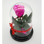 ярко-розовая роза в стеклянной колбе мини